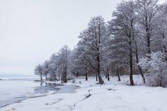 Lago y árboles nevados Imagen de archivo