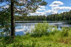 lago y árboles tranquilos del bosque fotografía de archivo libre de regalías