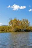 Lago y abedul blanco Fotografía de archivo libre de regalías