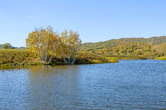Lago y abedul blanco Foto de archivo