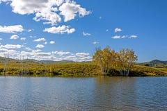 Lago y abedul blanco Imágenes de archivo libres de regalías