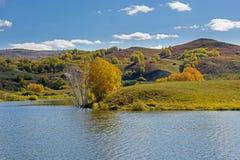 Lago y abedul blanco Imagenes de archivo