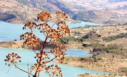Lago y agavo cerca de Zahara de la Sierra, Andaluc3ia foto de archivo libre de regalías