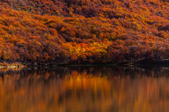 Lago y bosque hermosos del otoño en las montañas fotos de archivo libres de regalías