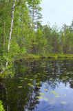 Lago y bosque landscape Imagenes de archivo