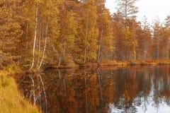 Lago y bosque landscape Fotografía de archivo libre de regalías