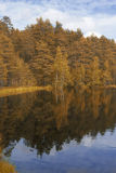Lago y bosque landscape Imagen de archivo