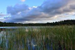 Lago y cañas fotografía de archivo libre de regalías
