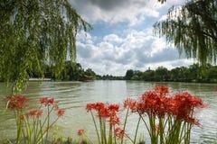 Lago y las flores del equinoccio imagenes de archivo