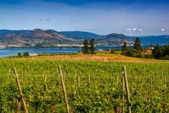 Lago y montañas de desatención vineyard Foto de archivo libre de regalías