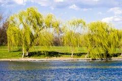 Lago y naturaleza Imagen de archivo libre de regalías