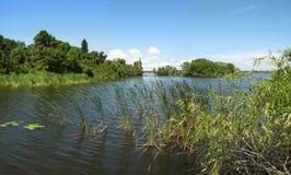 Lago y región pantanosa florida   Imagen de archivo libre de regalías