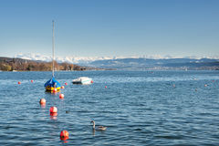 Lago zurich com alpes Fotos de Stock Royalty Free