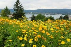 Lago Zurigo Kilchberg Immagini Stock Libere da Diritti