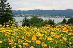 Lago Zurigo Kilchberg Fotografia Stock Libera da Diritti