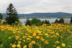 Lago Zurigo Kilchberg Fotografia Stock