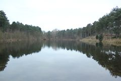 A lagoa é cercada por árvores na floresta fotos de stock