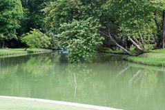 A lagoa é cercada por parques Com as árvores grandes cercadas Fotos de Stock Royalty Free
