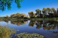 Lagoa. Foto de Stock