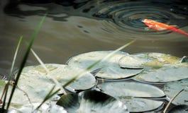 Lagoa Imagem de Stock