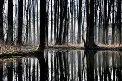 lagoa Imagens de Stock Royalty Free