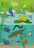 lagoa ilustração stock