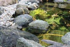 lagoa Foto de Stock Royalty Free