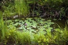 Lagoa ajardinando pequena Fotos de Stock