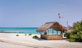 Lagoa azul e ilha tropical em Maldivas Fotografia de Stock