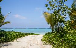 Lagoa azul e ilha tropical em Maldivas Fotos de Stock