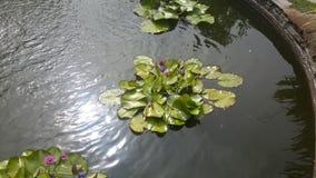 Lagoa bonita Fotografia de Stock Royalty Free