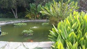 Lagoa bonita Imagem de Stock Royalty Free