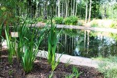 Lagoa bonita no parque da cidade Imagens de Stock Royalty Free