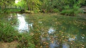 Lagoa calma com ponte video estoque