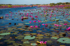Lagoa colorida Fotografia de Stock Royalty Free