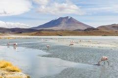 Lagoa colorida no platô andino alto, Bolívia imagens de stock
