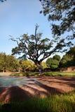 Lagoa com árvore grande Fotos de Stock
