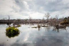 Lagoa com árvores secas e as nuvens strommy Fotos de Stock Royalty Free