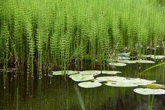 Lagoa com estações de tratamento de água Foto de Stock