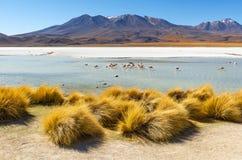 Lagoa com flamingos, Bol?via de Canapa fotos de stock royalty free