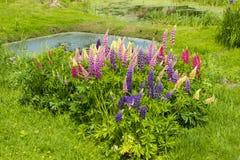 Lagoa com flores Imagem de Stock