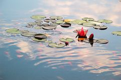 Lagoa com lírio de água e peixes do koi Fotografia de Stock