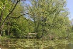 Lagoa com ponte de madeira, Alemanha fotografia de stock royalty free