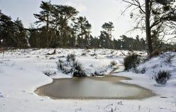 Lagoa congelada Fotos de Stock