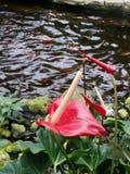 Lagoa da borboleta imagens de stock