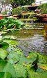 Lagoa da cachoeira imagem de stock royalty free