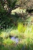 Lagoa da exploração agrícola Foto de Stock Royalty Free
