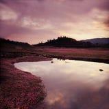 Lagoa da flor Fotografia de Stock