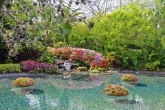 Lagoa da flor Fotografia de Stock Royalty Free