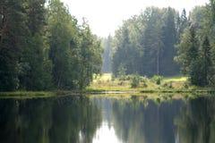 A lagoa da floresta Imagem de Stock